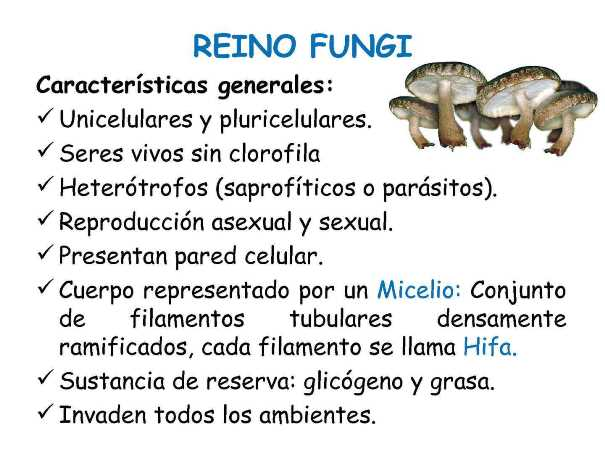 Características del reino fungi