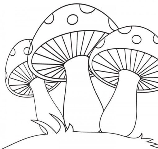 Dibujos del reino fungi