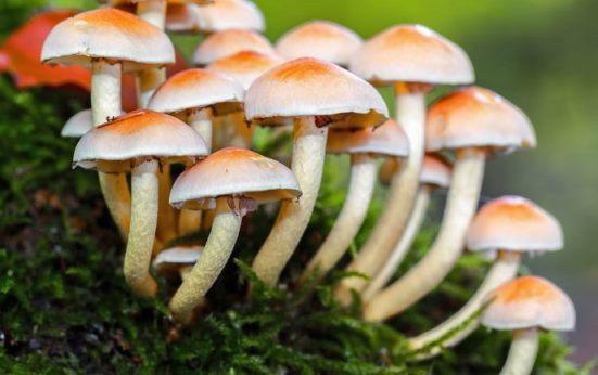 ¿Qué estudia el reino fungi?